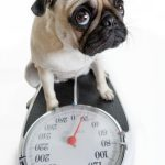 6 Tips to Improve Your Pet's Physical Fitness, Avoid Obesity