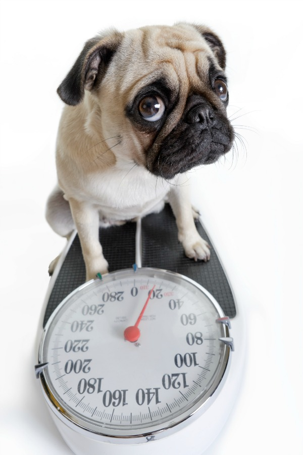 """6 Tips to Improve Your Pet's Physical Fitness, Avoid Obesity """