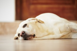 5 Ways to Help a Lonely Pet