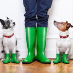 Disaster Prep for Pets