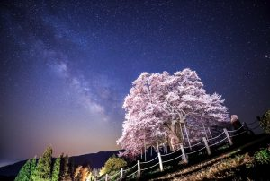 11 Ways to Enjoy Setouchi, Japan