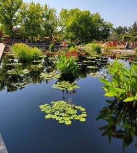 A Day at Denver Botanic Garden