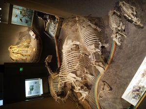 Dinosaur bones…Mummies…and Gigantic Geodes… Oh My