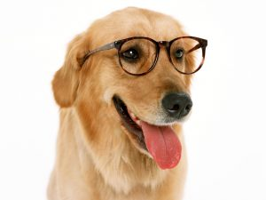 """dog with glasses"""