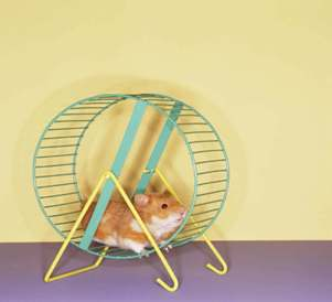 Stepping off the Hamster Wheel