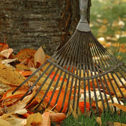 Want To Organize A Successful Neighborhood Cleanup? Here Are The Steps To Take