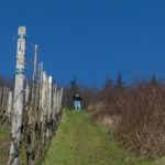 Riesling Wines…Do You Like Them?